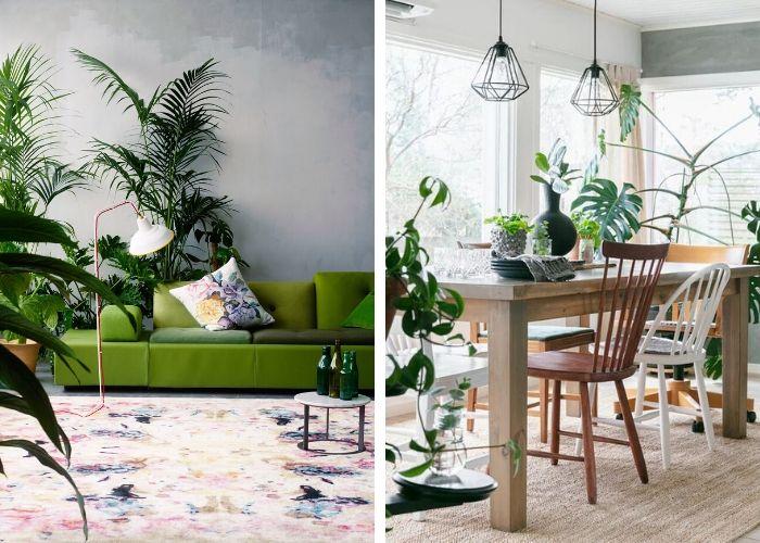Tendance déco - Plantes vertes dans l'intérieur d'une maison sur mesure